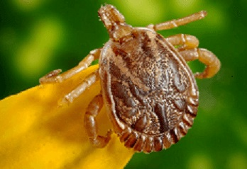 Lyme Disease and How to Prevent it
