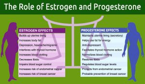 The Role of Estrogen and Progesterone